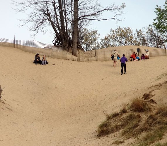 Chicago Area Campgrounds: Indiana Dunes State Park