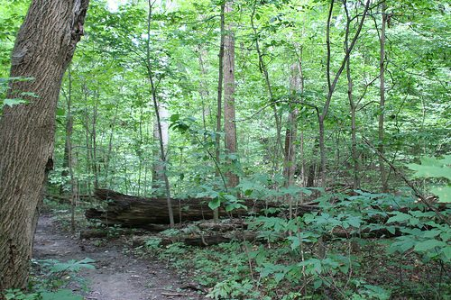 Chicago Area Campgrounds: Forest Glen Preserve